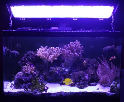 Plafoniera LED montati su acquario RED SEA 250