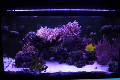 Plafoniera LED giorno su acquario RED SEA 250